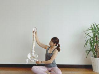 骨盤の大切さを伝えます